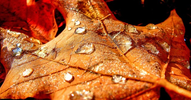 clearwater frosty autumn leaf