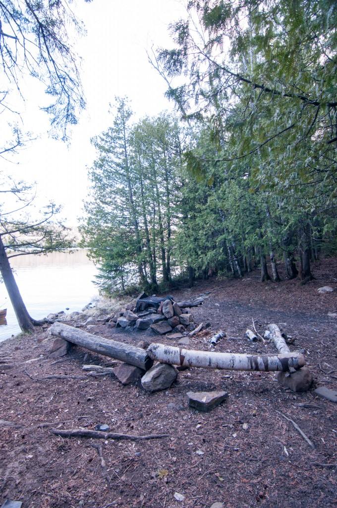 Pine-5